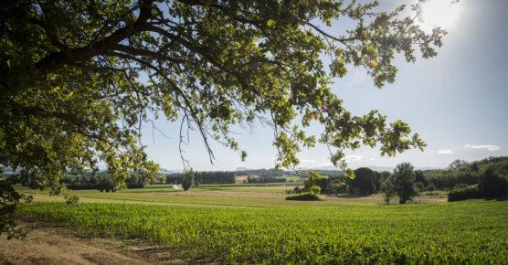 Plaine de Sauzet