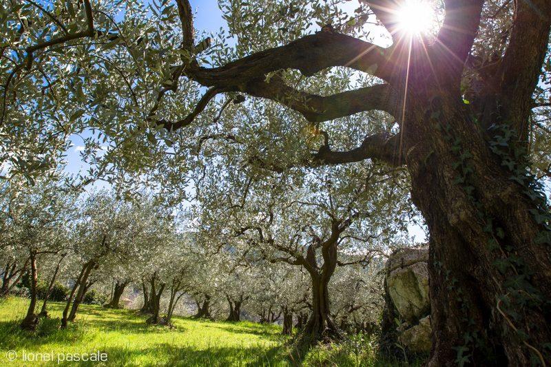 Séjour Aux Portes de Provence (3 jours / 2 nuits) à Montélimar - 1